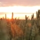 Wheat Field at Sunset on a Warm Spring Wecar. The Sun's Rays Pass Through the Ears of Wheat - VideoHive Item for Sale
