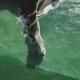 Sea Coast with Waves Hitting the Beach Etretat, d'Etretat - VideoHive Item for Sale