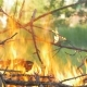 In the Forest a Big Fire Burns - VideoHive Item for Sale