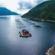 Farm Salmon Fishing in Norway - VideoHive Item for Sale