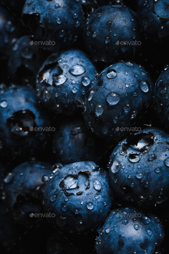 Fresh blueberry with water drops - Stock Photo - Images