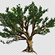Tree With Big Branches - VideoHive Item for Sale