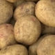 Potato Pile Rotating Motion Background. - VideoHive Item for Sale
