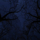 Moving Under Bare Trees at Night - VideoHive Item for Sale