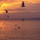Birds Slowly Fly Against Beautiful Sunset - VideoHive Item for Sale
