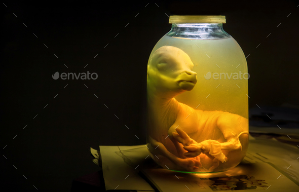 Calf embryo in glass jar with formalin. Veterinary preparation - Stock Photo - Images