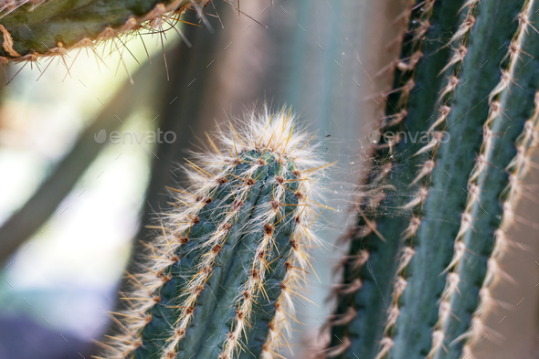 Cactus in park - Stock Photo - Images
