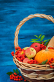 Autumnal still life with pumpkins, apples and rowanberry - PhotoDune Item for Sale