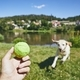 Summer time with dog in countryside - PhotoDune Item for Sale