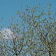 Green Tree And Sky - VideoHive Item for Sale