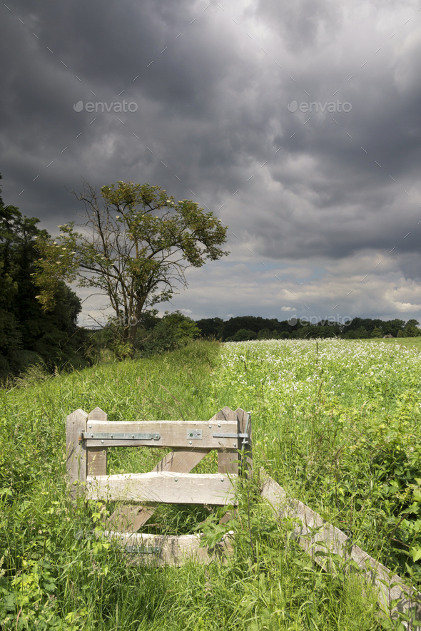 Meadow with threatening air - Stock Photo - Images