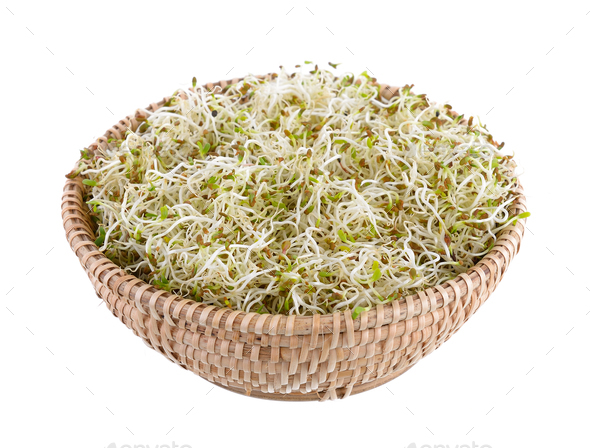 Sprouted alfalfa seeds in basket on a white background - Stock Photo - Images