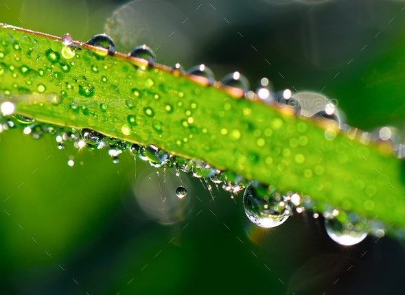water drops on leaves in moring - Stock Photo - Images