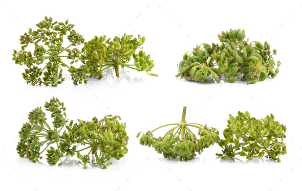 fresh dill seeds on white background - Stock Photo - Images