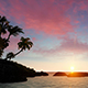 Tropical Sunset With Palm Tree Silhouette - VideoHive Item for Sale