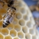 Working Bees Work Honeycomb with Honey. - VideoHive Item for Sale
