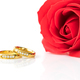 Red roses and gold rings on white_-2 - PhotoDune Item for Sale