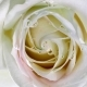 Top View of a Beautiful Spinning Flower . - VideoHive Item for Sale