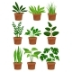 Home Decorative Plants Set - GraphicRiver Item for Sale