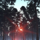 Forest Sunset - VideoHive Item for Sale