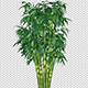 Growing Bamboo Shrub - VideoHive Item for Sale