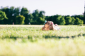 Little girl laying on the grass field and looking aside. - PhotoDune Item for Sale