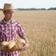 Farmer Walks the Wheat Field and Carries a Basket of Bread - VideoHive Item for Sale