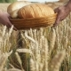 The Hands of Men and Women Carry a Basket of Bread Along the Ripe Wheat Field - VideoHive Item for Sale