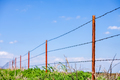 Barbed wire fence against blue sky - PhotoDune Item for Sale