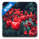 RedBazz | Special Color Grading Effects Photoshop Action for Professional Photographer