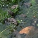 Many Small Frogs in a Pond, - VideoHive Item for Sale