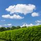 Green hedge - PhotoDune Item for Sale