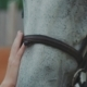 of Young Girl Caressing Horse's Nose . Slowly - VideoHive Item for Sale
