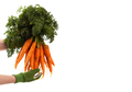 Bunch of carrots  - PhotoDune Item for Sale