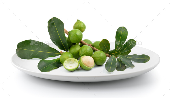 fresh macadamia nut in plate isolated on a white background - Stock Photo - Images