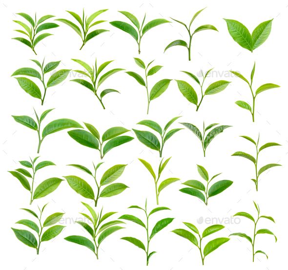 tea leaf on white background - Stock Photo - Images