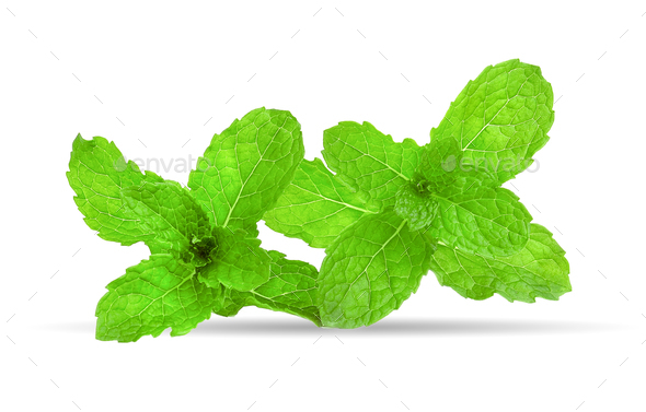 mint leaf on white background - Stock Photo - Images