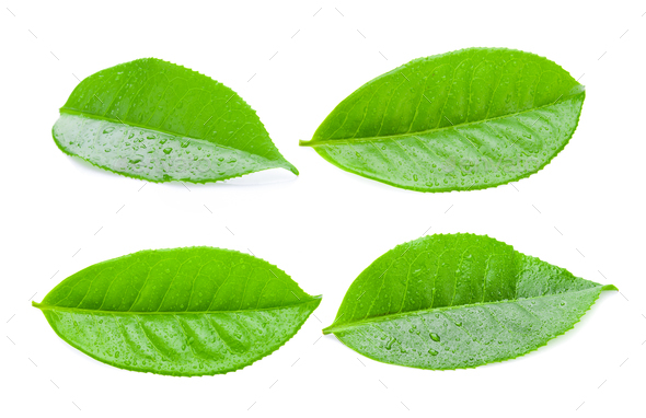 tea leaves with drops isolated on a white background - Stock Photo - Images
