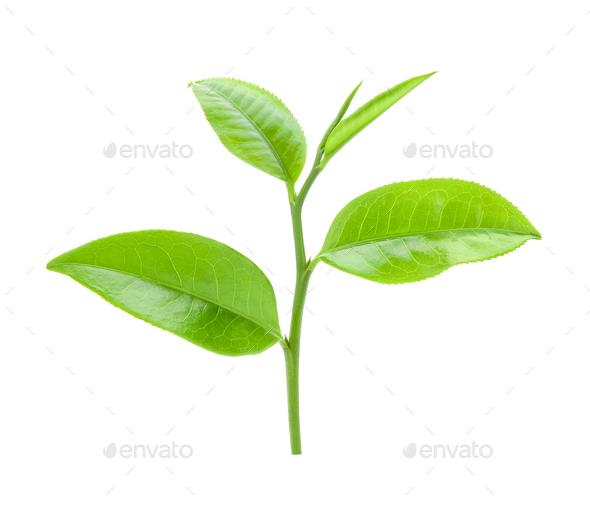 tea leaf on isolated white background - Stock Photo - Images