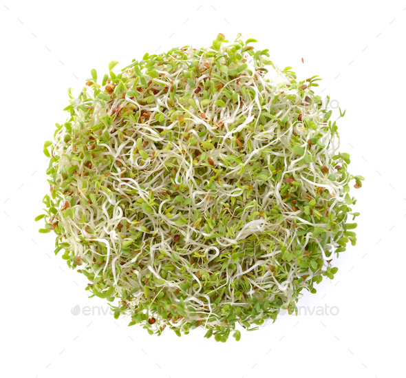 Alfalfa Sprout on white background - Stock Photo - Images