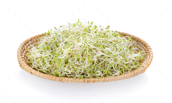Alfalfa Sprout in a basket on white background - Stock Photo - Images
