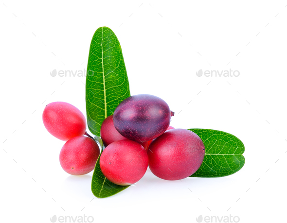 bengal-currants, carandas-plum, isolated on white background. - Stock Photo - Images