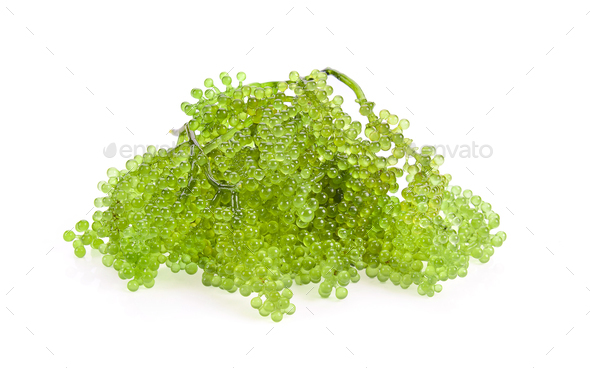 Sea grapes ( green caviar ) seaweed on white background - Stock Photo - Images