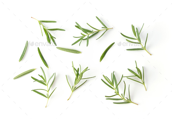 Rosemary isolated on white background - Stock Photo - Images