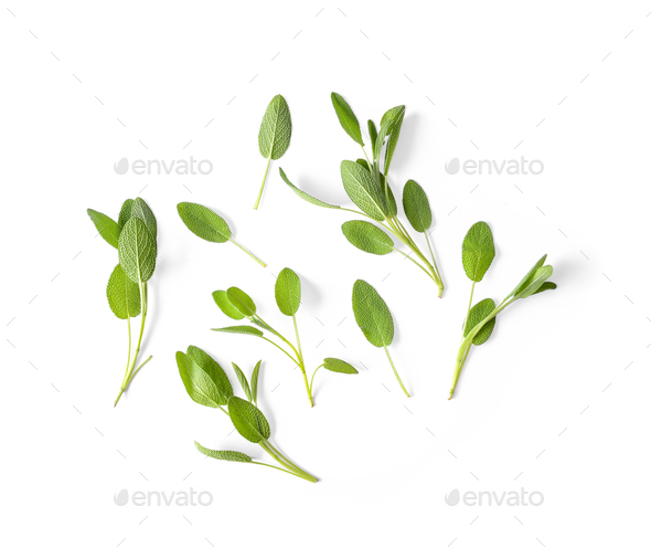 Sage leaves isolated on white background - Stock Photo - Images