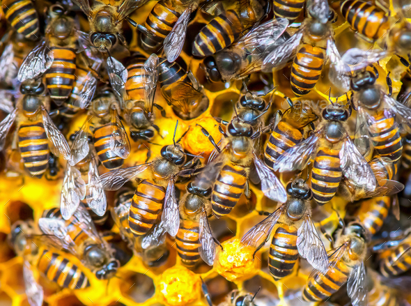 Close up view of the working bees on honey cells - Stock Photo - Images