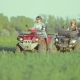 Group of People, a Company of Friends Riding a Quad Bike in a Field During Sunset - VideoHive Item for Sale