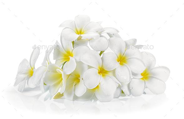 frangipani flower isolated white background - Stock Photo - Images