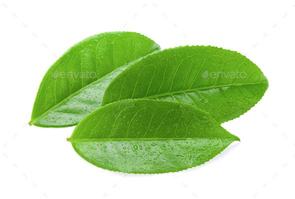 tea leaf isolated on white background - Stock Photo - Images