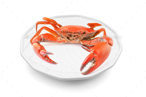sea crab in plate on white background - Stock Photo - Images